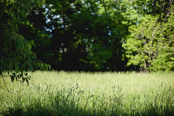 Free stock photos for blogs - Grassy Field