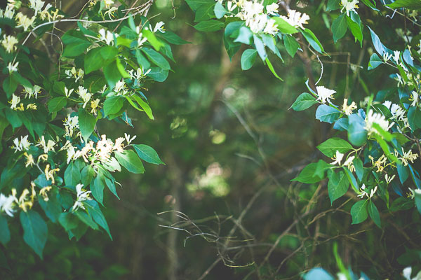 free stock photos - trees and flowers