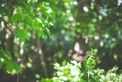 Free Stock Photos for Blogs - Forest and the Trees