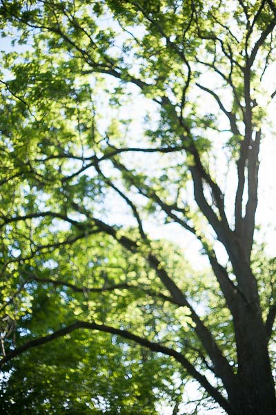 Free Stock Photos for Blogs - Trees and Sunlight