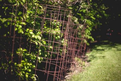 Free Stock Photos for Blogs - Tomato Cages from the Garden