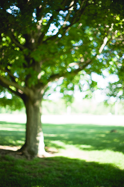 Free Stock Photos for Blogs - Trees and Sunlight 6