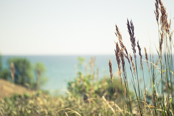 Free Stock Photos for Blogs - Beach Grass 4