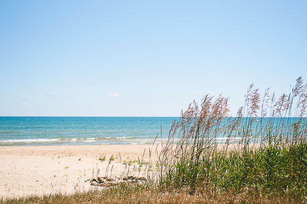 Free Stock Photos for Blogs - Beach Grass 5