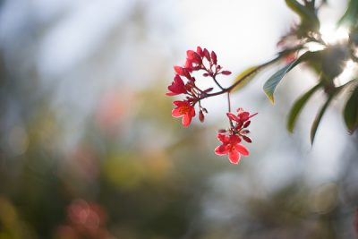 Free Stock Photos for Blogs - Red Tropical Flower 1