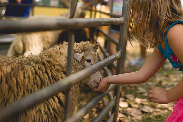 Free Stock Photos for Blogs - Child Feeding a Sheep 1