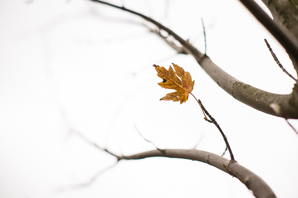 Free Stock Photos for Blogs - Last Day of Fall 2