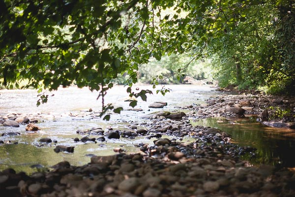 Free Stock Photos for Blogs - Trees and Rocks by the River 1