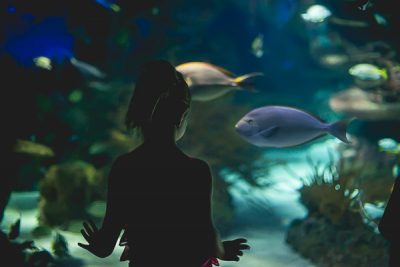 Free Stock Photos for Blogs - Kid at the Aquarium 1