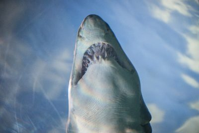 Free Stock Photos for Blogs - Shark at the Aquarium 1