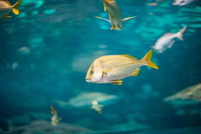 Free Stock Photos for Blogs - Fish Tank at the Aquarium 1