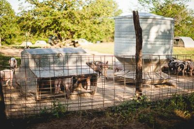 Free Stock Photos for Blogs - Pig Farm 1