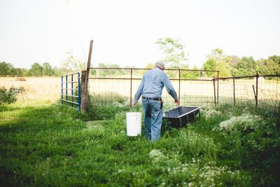 Free Stock Photos for Blogs - Farmer Feeding Animals 1