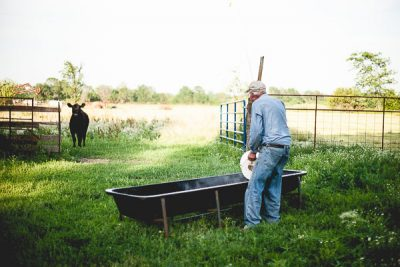 Free Stock Photos for Blogs - Farmer Feeding the Cow 1