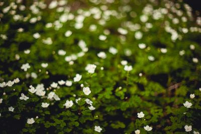 Free Stock Photos for Blogs - Forest Flowers 1