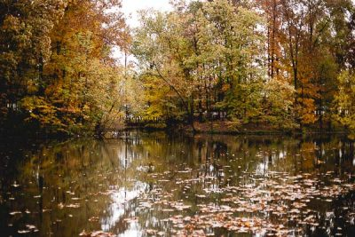 Free Stock Photos for Blogs - Forest Lake in Fall 1