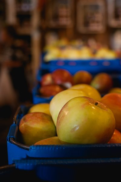 Free Stock Photos for Blogs - Apple Orchard 1