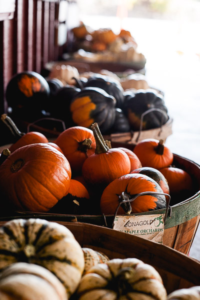 Free Stock Photos for Blogs - Pumpkin Patch 1