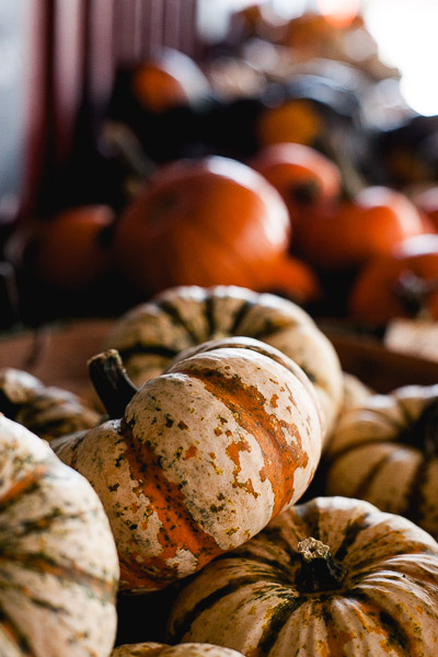 Free Stock Photos for Blogs - Pumpkin Patch 2