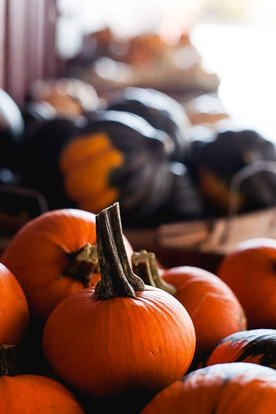 Free Stock Photos for Blogs - Pumpkin Patch 3