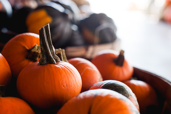 Free Stock Photos for Blogs - Pumpkin Patch 4
