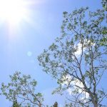 Free Stock Photos for Blogs - Sunburst Trees 1