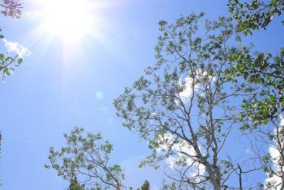 Free Stock Photos for Blogs - Sunburst Trees 1